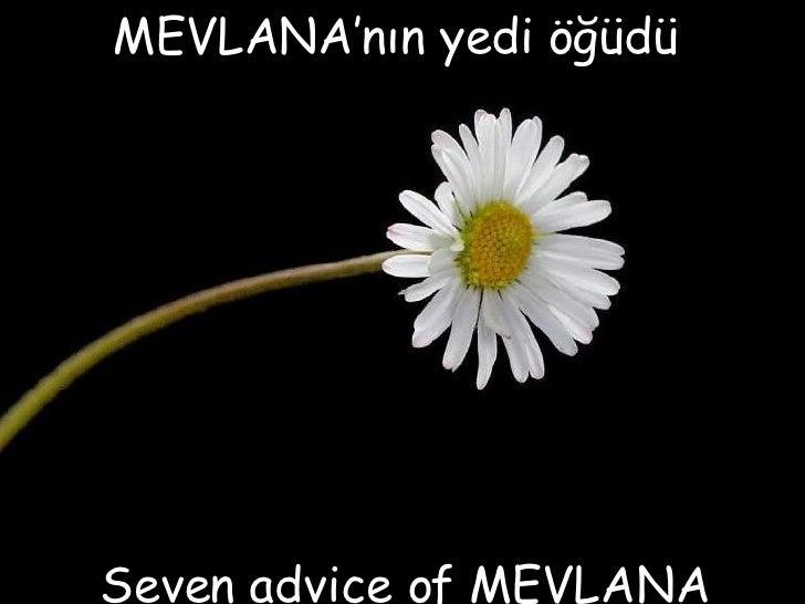 Sevenadviceof Mevlana