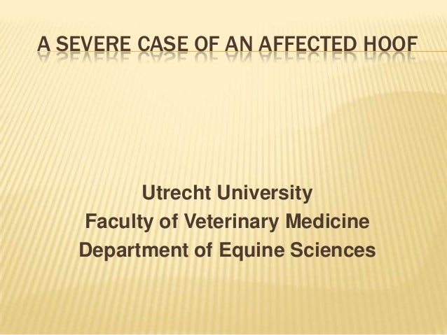 A SEVERE CASE OF AN AFFECTED HOOF  Utrecht University Faculty of Veterinary Medicine Department of Equine Sciences