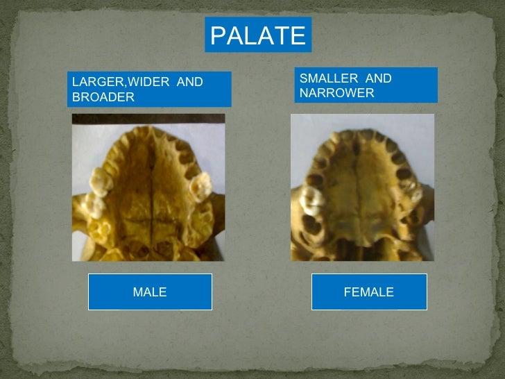 gender diferences