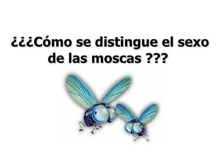 ¿¿¿Cómo se distingue el sexo de las moscas ???