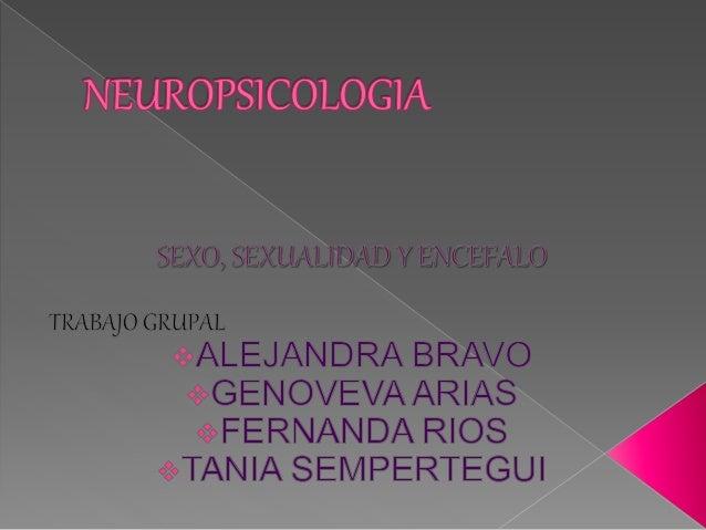  Sexualmente dimorfa→ comportamientos que difieren entre los sexos. › Seres humanos → circuitos neuronales  Diferencias ...