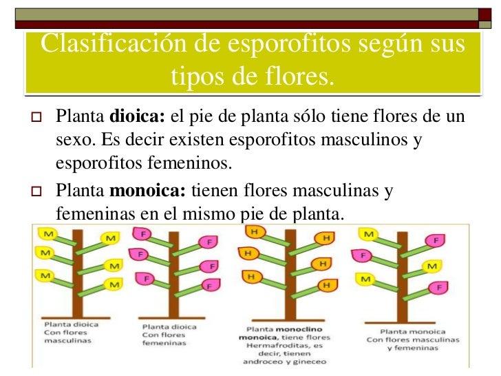 flores masculinas y femeninas en el mismo pie de planta