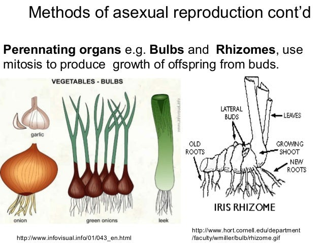 Vegetative Asexual Reproduction Asexual common plant p...