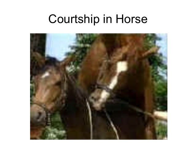 animal sexual behavior This behavior, both from the descriptive field studies cited above and in extensive study of domestic horses animal sexual advances on.