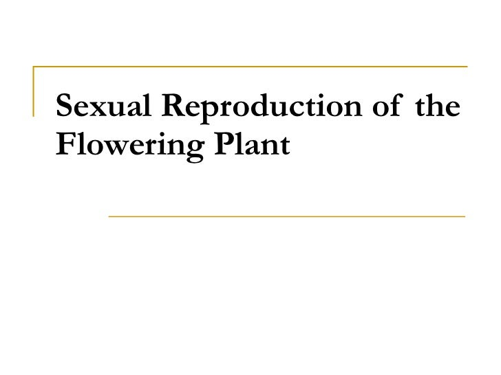 Sexual Reproduction of the Flowering Plant