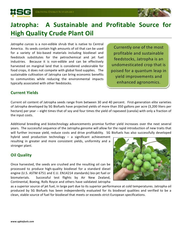 [Type                GROWING ENERGY SUSTAINABLYJatropha: A Sustainable and Profitable Source forHigh Quality Crude Plant O...
