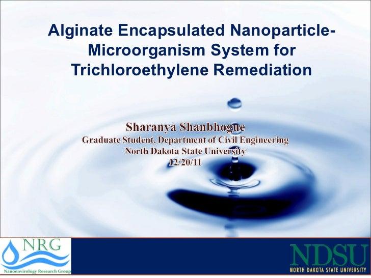 Alginate Encapsulated Nanoparticle-Microorganism System for Trichloroethylene Remediation