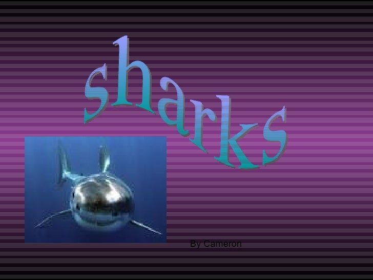 sharks By Cameron
