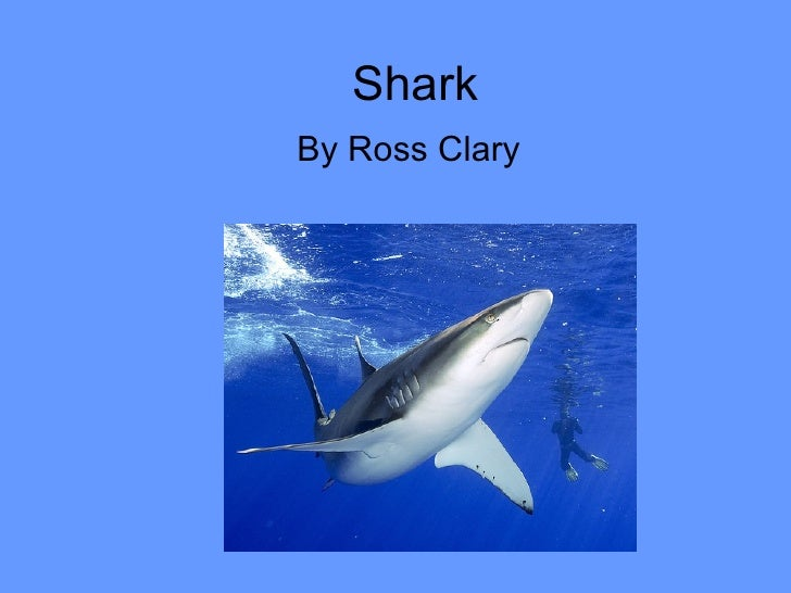 Shark by Ross