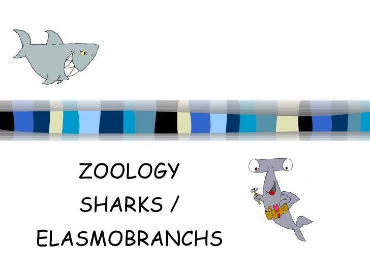ZOOLOGY SHARKS / ELASMOBRANCHS
