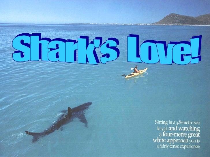 Sharks Love