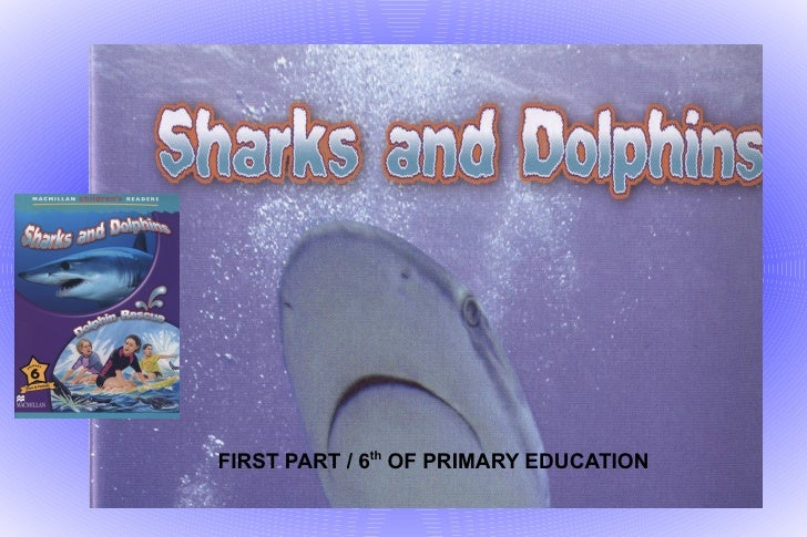Sharks and dolphins 1