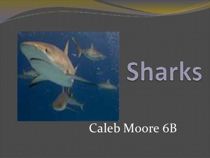 Sharks<br />Caleb Moore 6B<br />