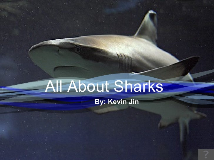 Sharks by Kevin
