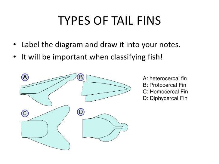 diagram fish bone shell diagram   elsavadorla Shark Anatomy Diagram Skate Fish Information
