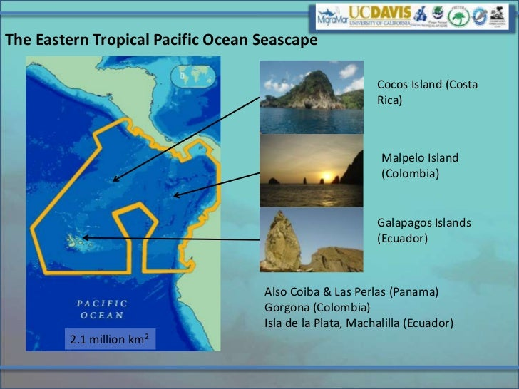 The Eastern Tropical Pacific Ocean Seascape                                                         Cocos Island (Costa   ...