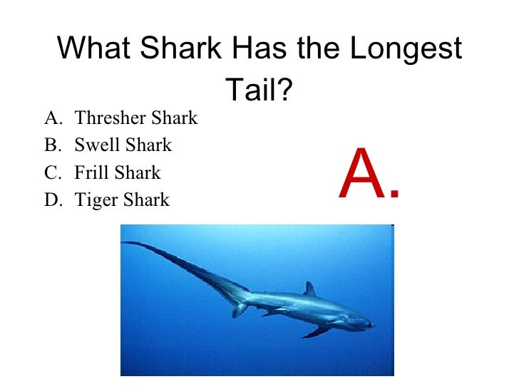 hammerhead shark diagram ocean sunfish diagram