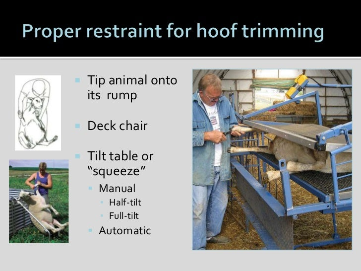 Sheep Hoof Health And Management