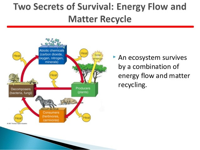 Ecosystem Cycle Matter Energy Flow Diagram Pictures to Pin on – Cycles of Matter Worksheet