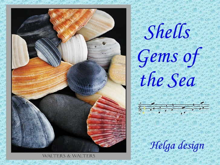 Shells Gems Of The Sea