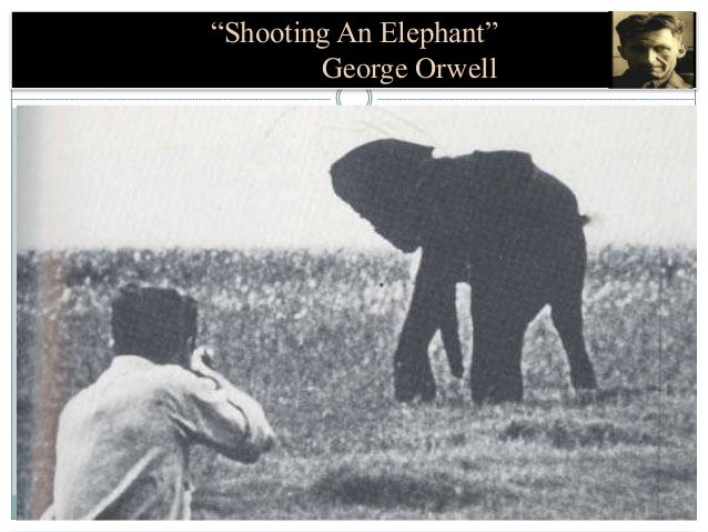 an interpretation of shooting an elephant an essay by george orwell George orwell's classic essay shooting an elephant has a few conclusions you can draw from it specifically two main conclusions that show the meaning of this essay.