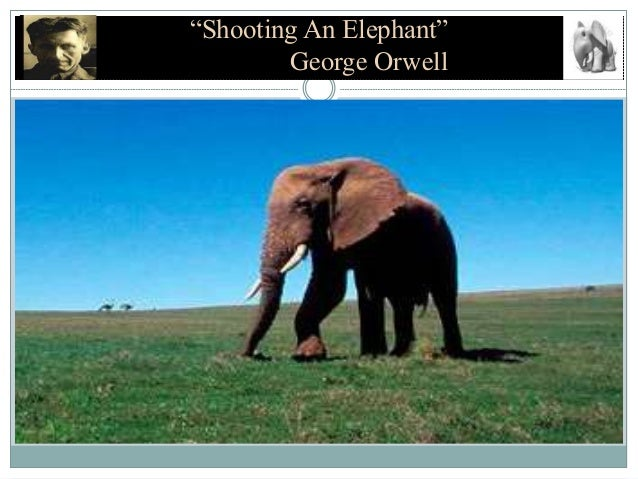 George Orwell's shooting an elephant question?