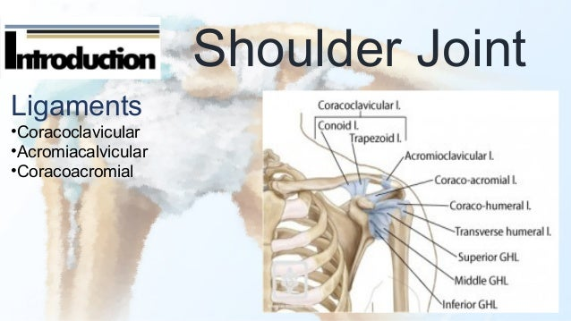 Shoulder fx & dislocation