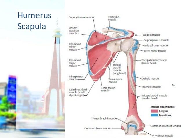 Neck anatomy bones