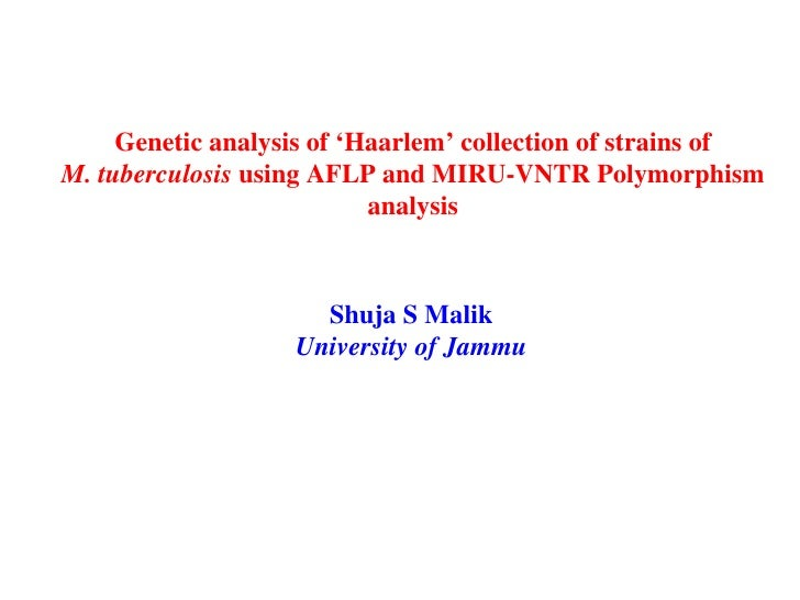 Genetic analysis of 'Haarlem' collection of strains of  M. tuberculosis  using AFLP and MIRU-VNTR Polymorphism  analysis  ...
