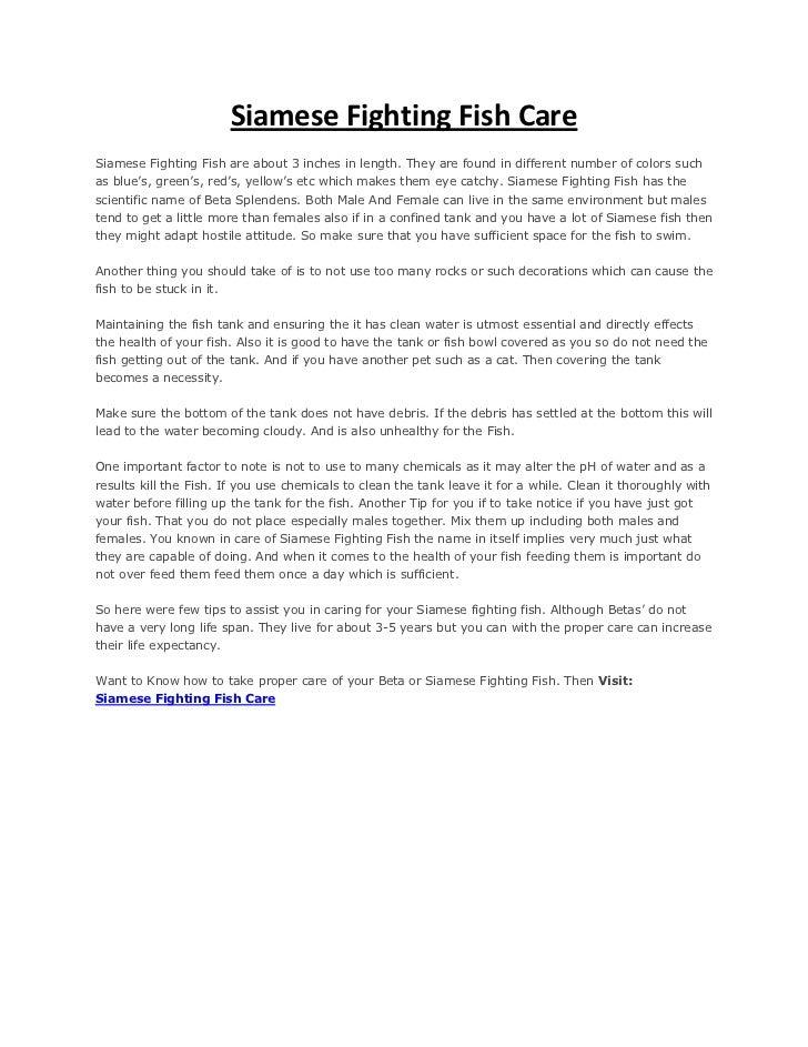 Siamese fighting fish care