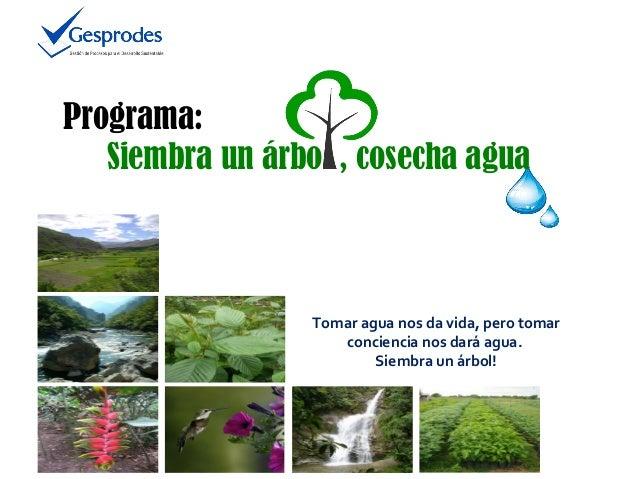 Programa: Siembra un árbo , cosecha agua  Tomar agua nos da vida, pero tomar conciencia nos dará agua. Siembra un árbol!