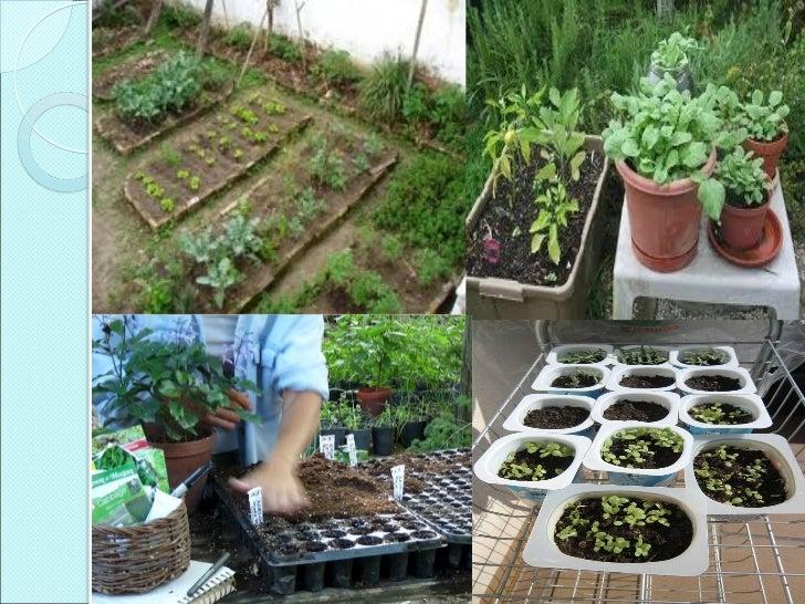 Siembra y trasplante for Plantas hortalizas ejemplos
