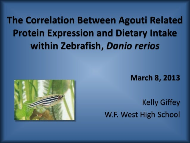 The Correlation Between Agouti Related Protein Expression and Dietary Intake     within Zebrafish, Danio rerios           ...
