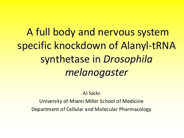 A full body and nervous system specific knockdown of Alanyl-tRNA synthetase in Drosophila melanogaster AJ Sacks  Universit...
