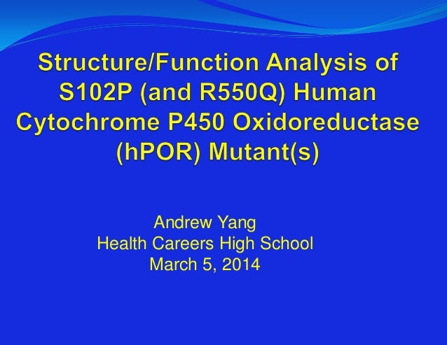 Structure-Function Analysis of POR Mutants