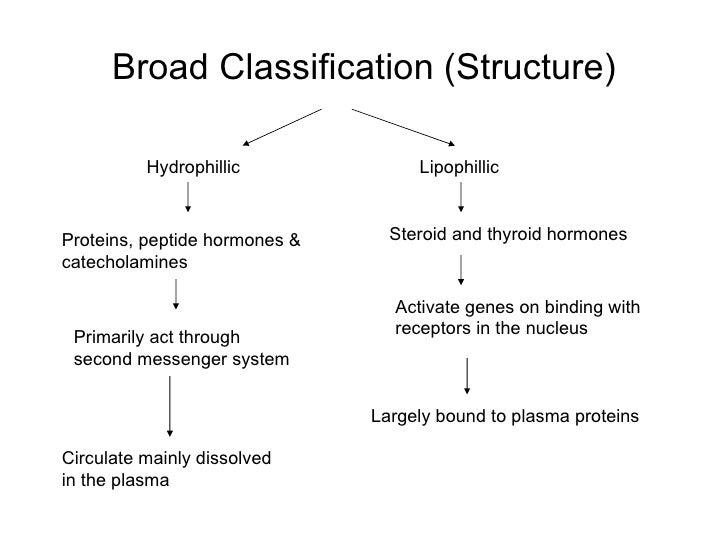 list of protein hormones vs steroid hormones