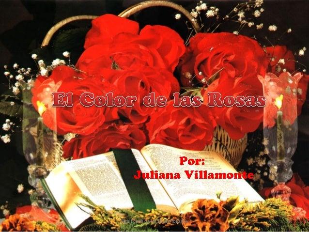 Significado de las Rosas/foto@jv   1