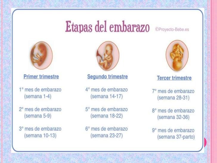 Antibioticos en el embarazo primer trimestre