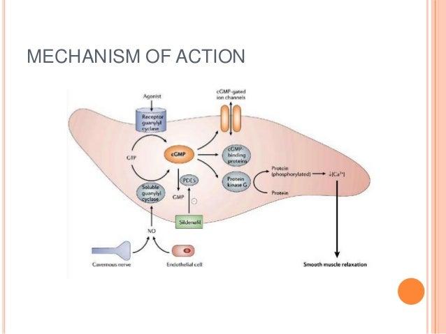 viagra phosphodiesterase 5