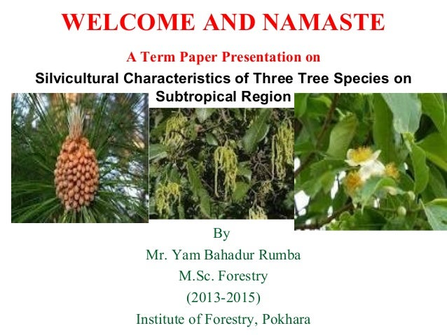 WELCOME AND NAMASTE A Term Paper Presentation on Silvicultural Characteristics of Three Tree Species on Subtropical Region...