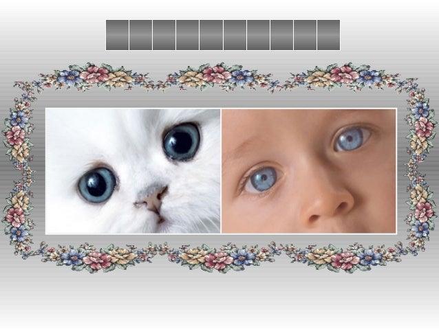 Choisis maintenant un animal qui te ressemble le plus Choisis maintenant un animal qui te ressemble le plus