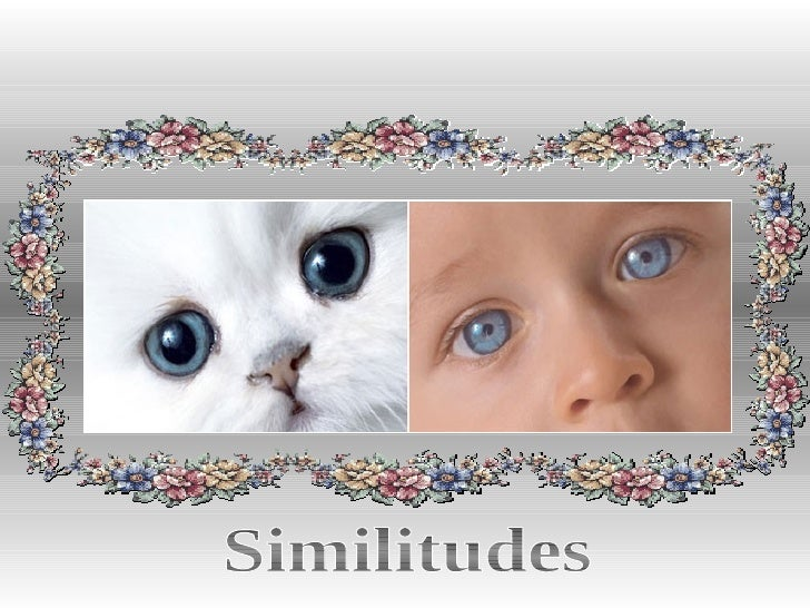 Similitudes