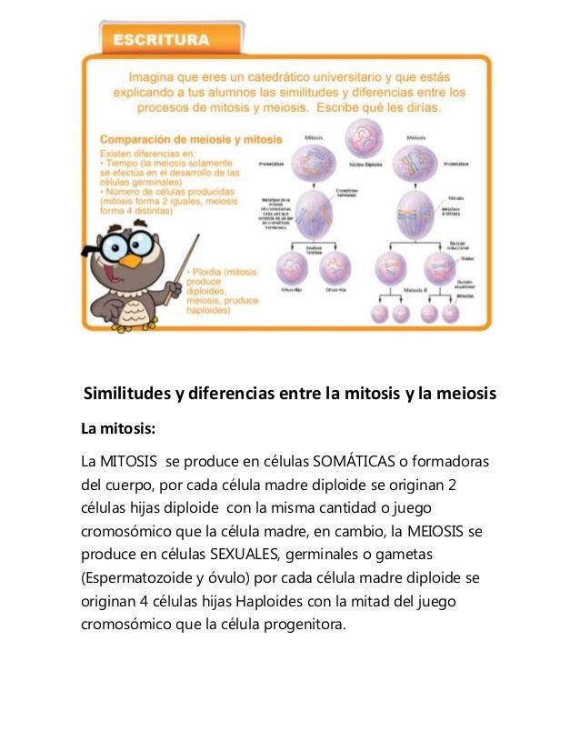 Similitudes y diferencias entre la mitosis y la meiosisLa mitosis:La MITOSIS se produce en células SOMÁTICAS o formadorasd...