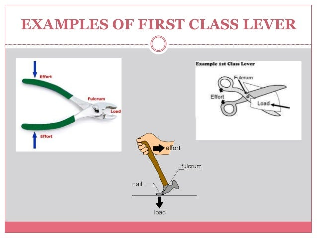 Example Of 1st Class Lever | | 2018 january calendar