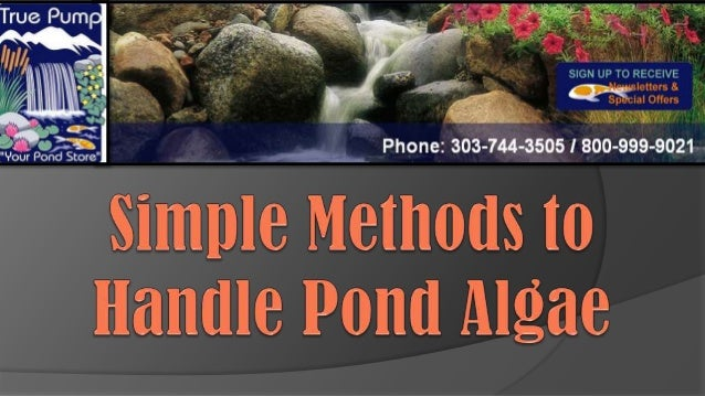 Managing pond algae may be initiated starting from the development ofthe pond. You can avoid the overgrowth and multiply o...