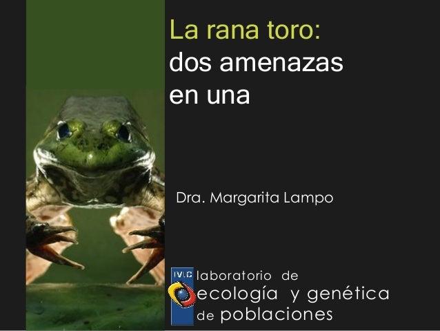 La rana toro:dos amenazasen unaDra. Margarita Lampo  laboratorio de  ecología y genética  de poblaciones