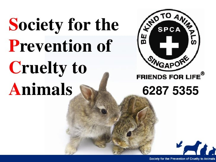 Society for thePrevention ofCruelty toAnimals           6287 5355