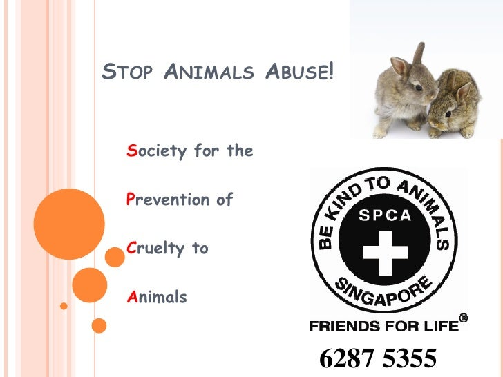 STOP ANIMALS ABUSE!  Society for the  Prevention of  Cruelty to  Animals                    6287 5355