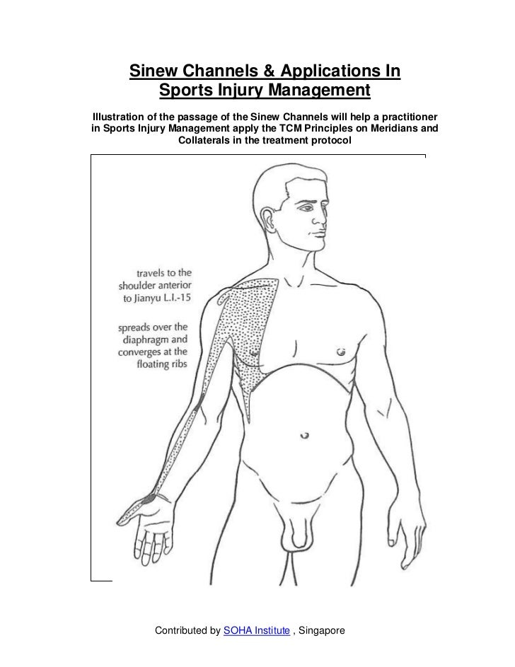 Sinew Channels & Applications In           Sports Injury ManagementIllustration of the passage of the Sinew Channels will ...