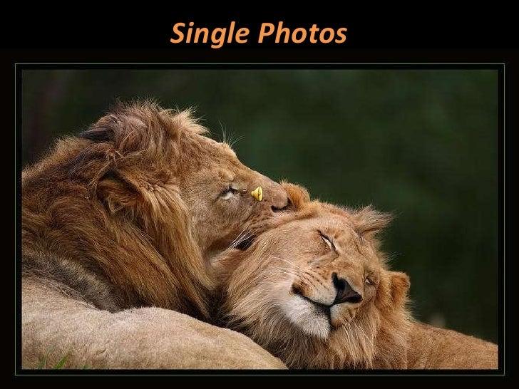 Single Photos<br />